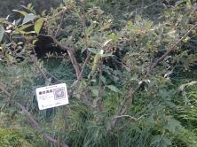 Árvore no Beihai Park com QR Code